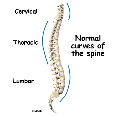 Natural Curve Of The Human Spine