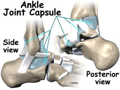ankle anatomy | eorthopod, Cephalic Vein