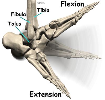Ankle Fusion Eorthopodcom