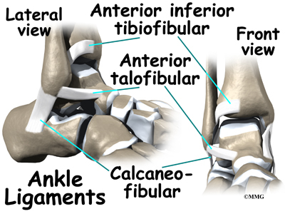 ligament that connects tibia and fibula