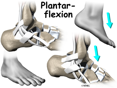 Peroneal Tendon Problems