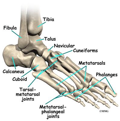 Flat Feet Eorthopod