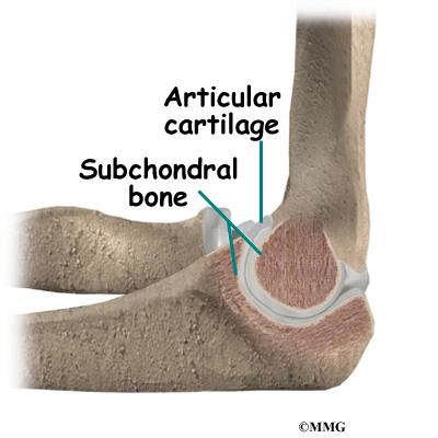 Elbow Anatomy eOrthopodcom