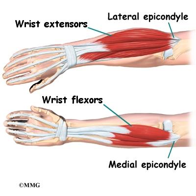 arm tendons diagram elbow anatomy eorthopod com  elbow anatomy eorthopod com