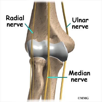 Elbow Anatomy | eOrthopod.com
