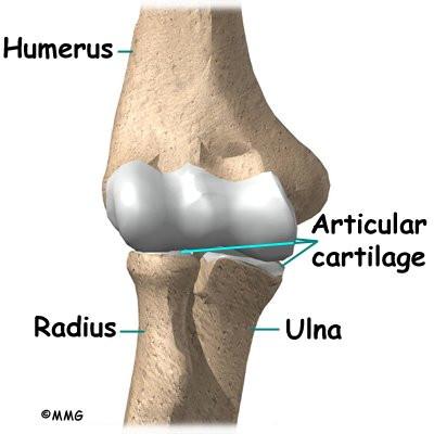 Elbow Dislocation | eOrthopod.com