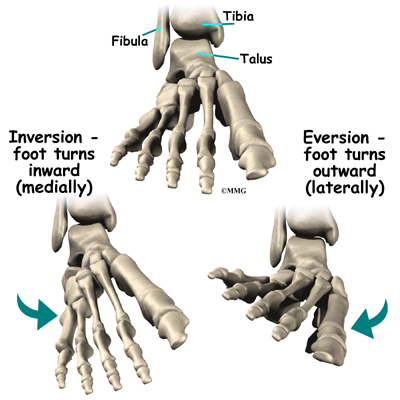 Foot Anatomy   eOrthopod.com
