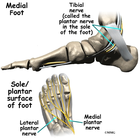 Foot Anatomy | eOrthopod.com