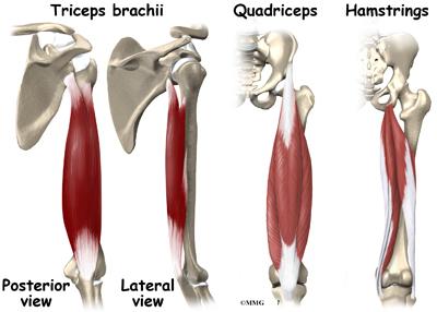 Muscle Cramps | eOrthopod.com