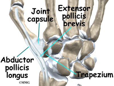 Carpometacarpal joint - Wikipedia