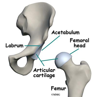 Femoroacetabular Impingement | eOrthopod.com
