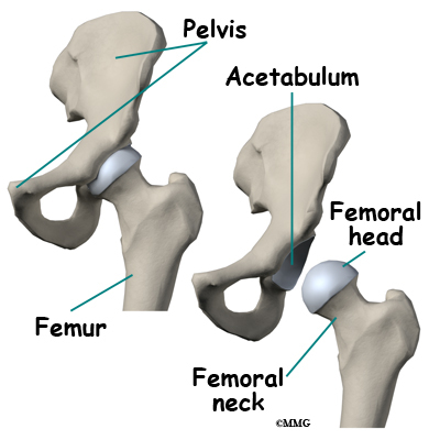 What parts of the hip are involved