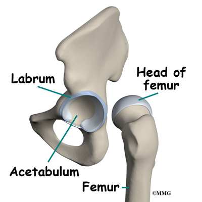 Labral Tears Of The Hip Eorthopod