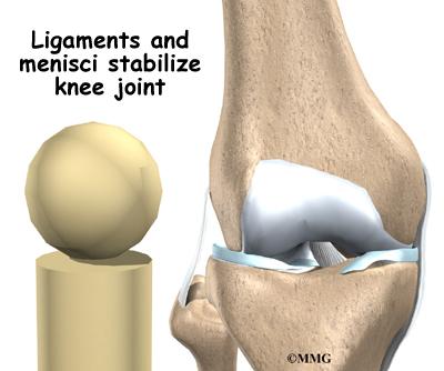 Knee anatomy eorthopod knee anatomy ccuart Images