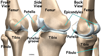 Artificial Joint Replacement of the Knee  eOrthopod.com