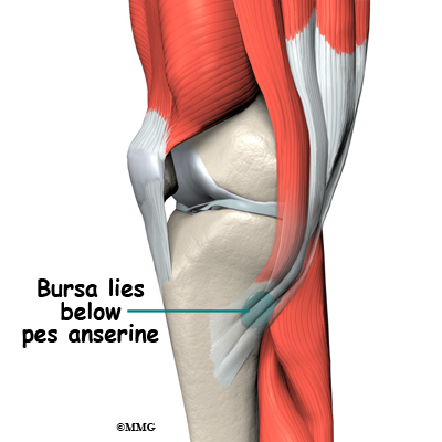 Pes anserine bursitis of the knee eorthopod pes anserine bursitis of the knee ccuart Image collections
