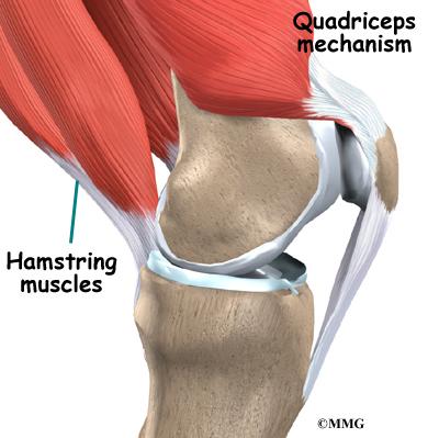 Quadriceps tendonitis eorthopod quadriceps tendonitis ccuart Images