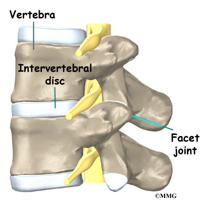 Low back pain anatomy