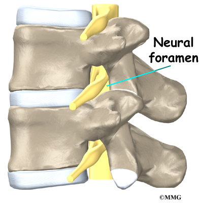 Lumbar Spine Anatomy Eorthopod