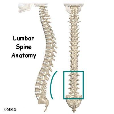 Anatomy of lower spine
