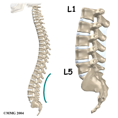 Lumbar SpondylolisthesisLumbar Vertebrae Labeled
