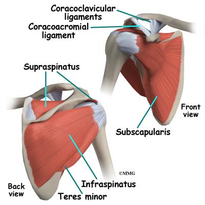 Arthroscopic shoulder anatomy