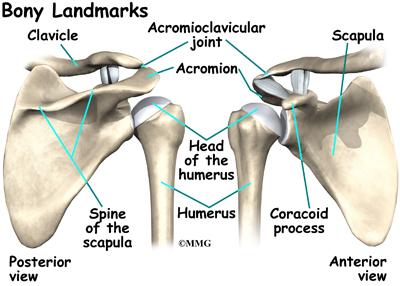 rotator cuff tear arthropathy | eorthopod, Cephalic Vein