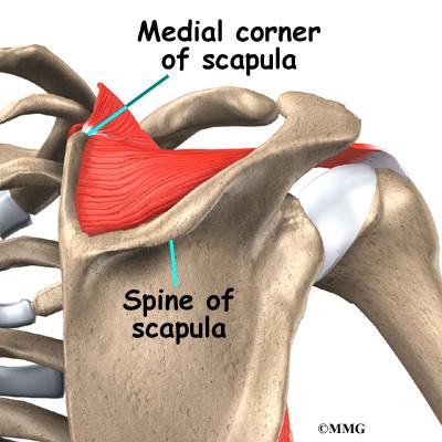 Snapping Scapula Syndrome Eorthopod