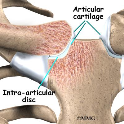 Sternoclavicular Joint Problems | eOrthopod.com