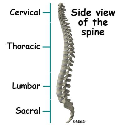 Spinal Tumors Eorthopod