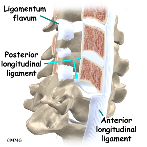 Cervical Spine Anatomy Eorthopod