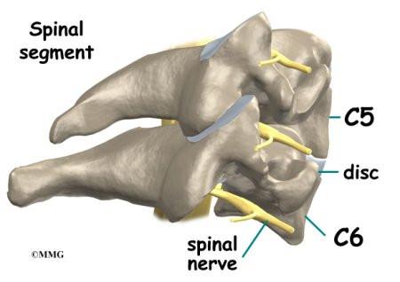 C spine anatomy