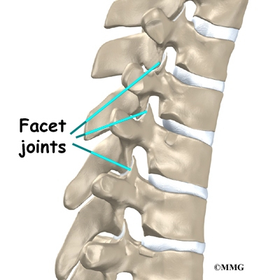 Backbone Diagram Joints Block And Schematic Diagrams