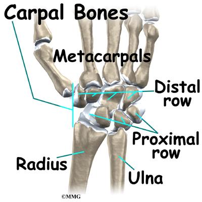 Wrist Anatomy | eOrthopod.com