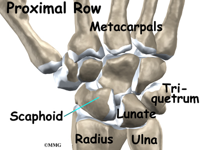 Wrist Anatomy Eorthopod