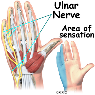 The nerves that travel through the wrist are subject to problems