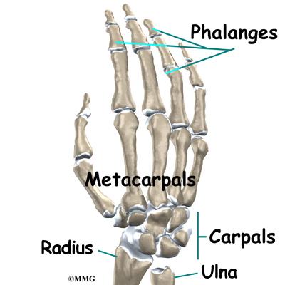 Wrist Joint Osteoarthritis   eOrthopod.com